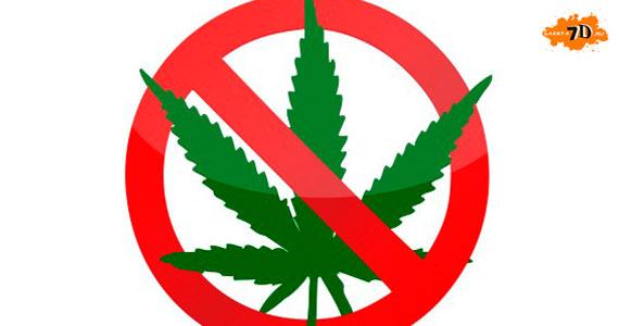Употребление марихуаны понижает IQ