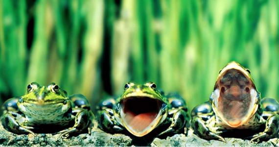притча 3 лягушки