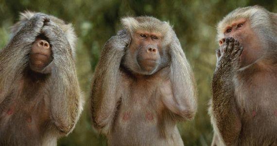 Что отличает тебя от обезьяны?