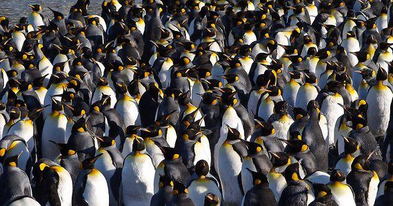Пингвины – вызов верящим в эволюцию